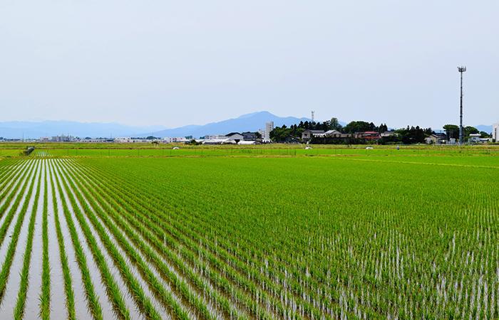 就農への道・就農のタイプ
