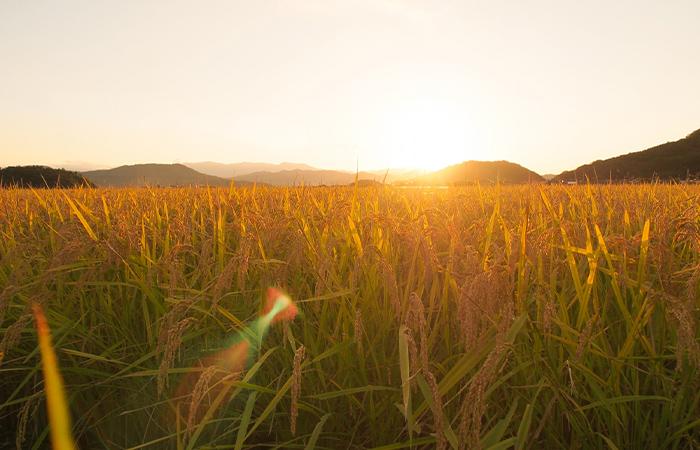 農業ビジネスの取組事例